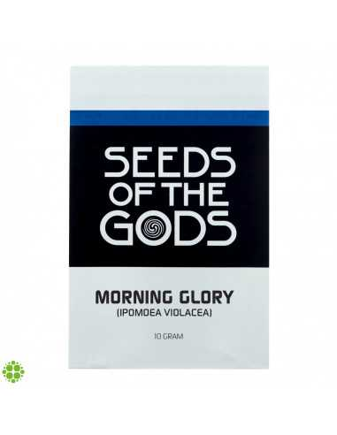 Morning glory (Ipomea Violacea) seeds  - 1